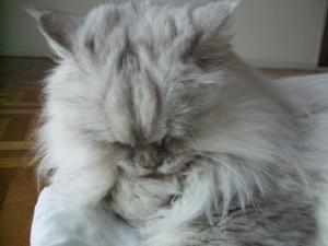 猫と一緒-20091223_04P