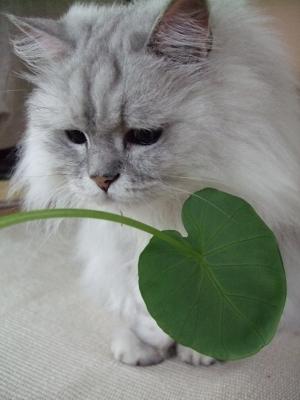 猫と一緒-20100630_02P