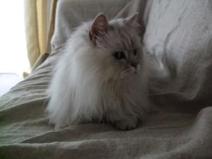 猫と一緒-20110805_10P