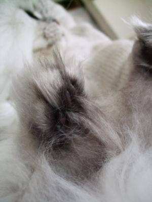 猫と一緒-20100114_01P