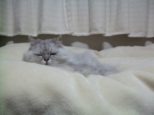 猫と一緒-20101112_02P