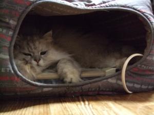 猫と一緒-201203013_11P