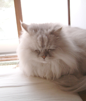 猫と一緒-20080131_2