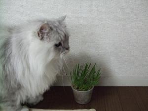 猫と一緒-20101119_02P