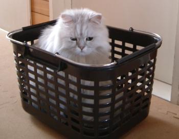 猫と一緒-20070709_2