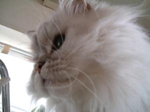 猫と一緒-20071129_2