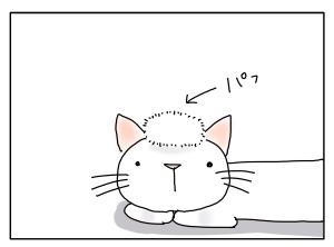 猫と一緒-20100816_03