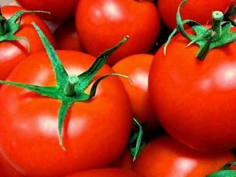 長生トマト