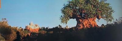 「ディズニー・アニマルキングダム」