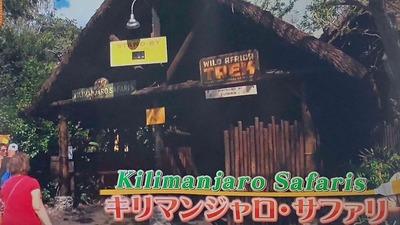 「Kilimanjaro Safaris」