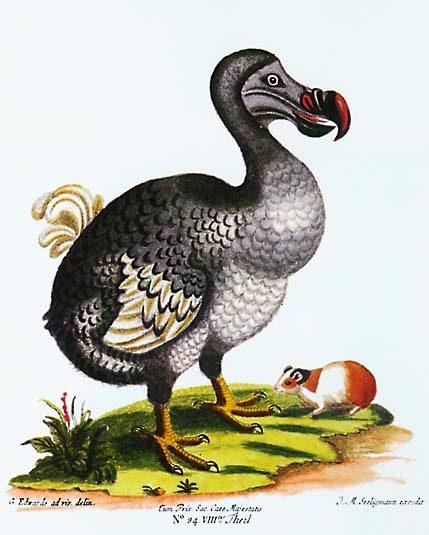 dodo%20savarie%20