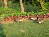 川のほとりの鳥