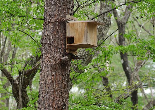 リス用の巣箱