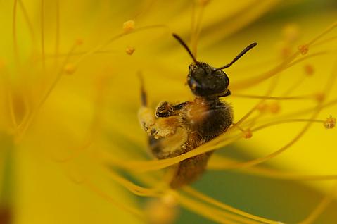 触覚を立てた蜂