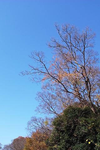 木立の風景