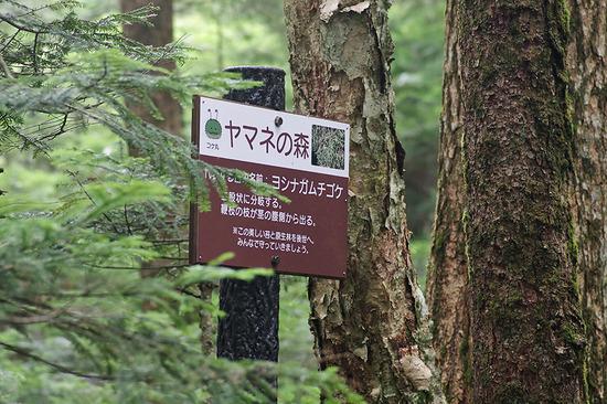 ヤマネの森