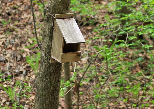 キセキレ用の巣箱