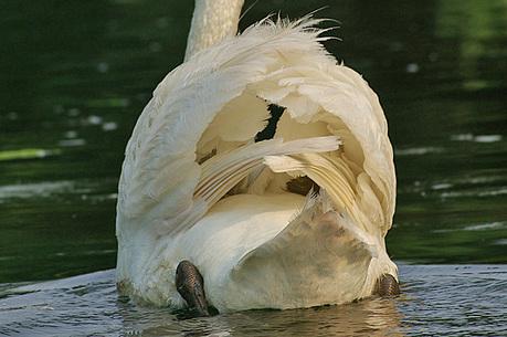 お父さんの後ろの羽