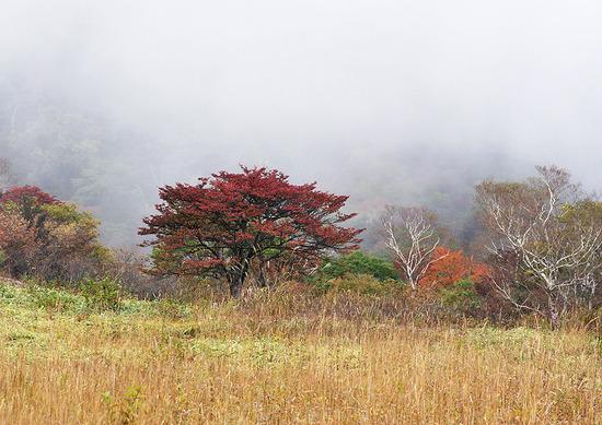 霧を背景に