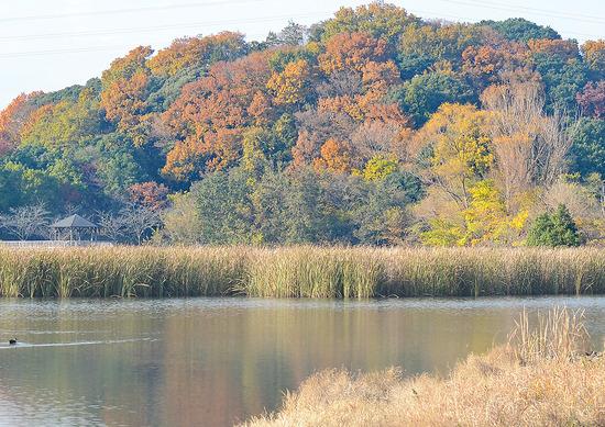 千駄堀池の紅葉