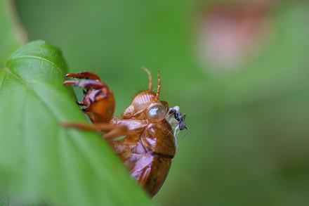 セミの抜け殻と蟻