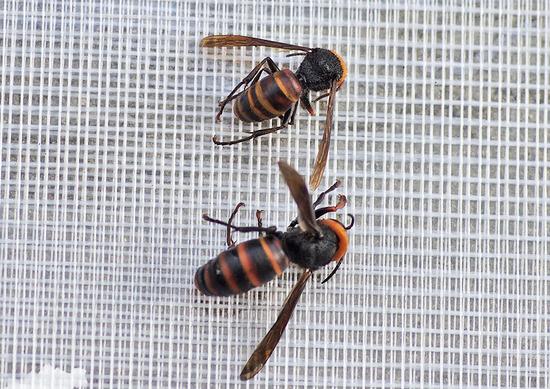 女王蜂と働き蜂