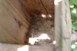 巣立った後の巣箱