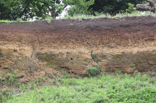 カワセミの巣穴