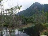 沢沿いの湿地