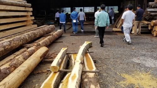 材木屋と行く森林ツアー2019-7