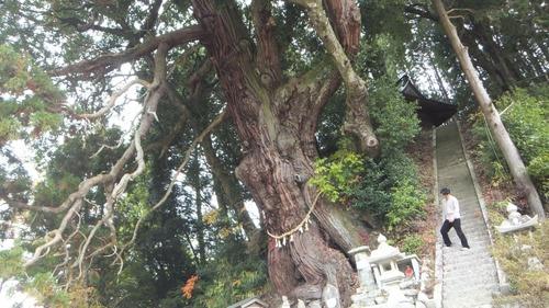 堂庭のスギ(千年杉) 9