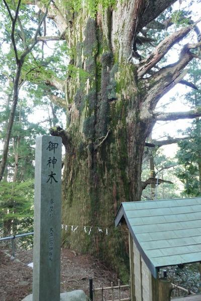 春埜杉 4