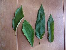 裏山から4種
