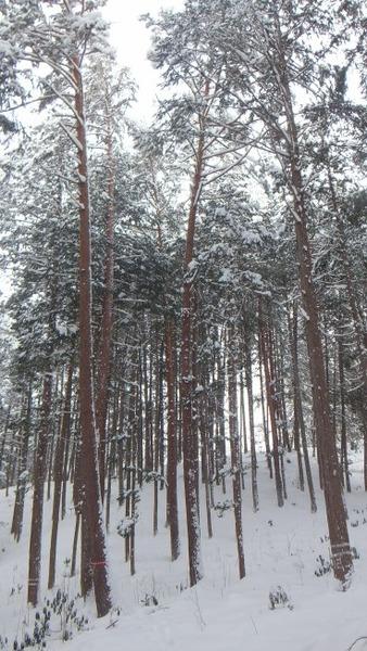 伐採実習4