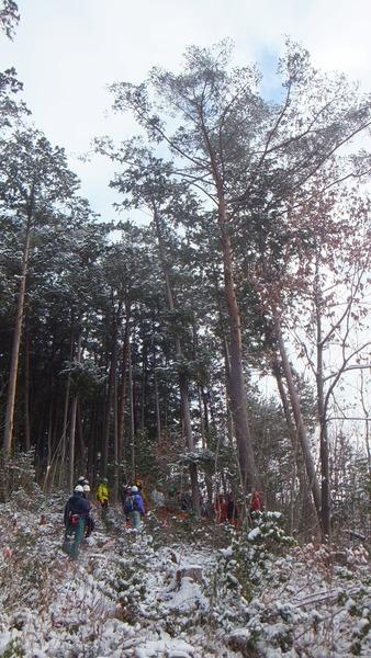 伐採授業11