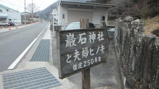 巌石神社の夫婦ヒノキ 2