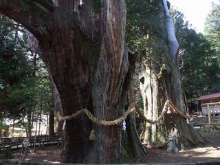杉の大杉 7
