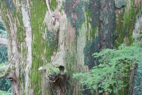 春埜杉 11