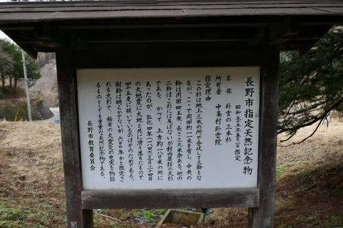 臥雲の三本杉 6