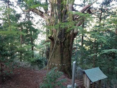 春埜杉 2