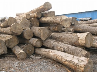 ホワイトアッシュ原木 1