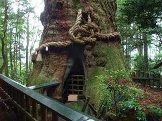 大杵社の大杉 3