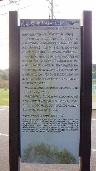 南志見住吉神社の松4