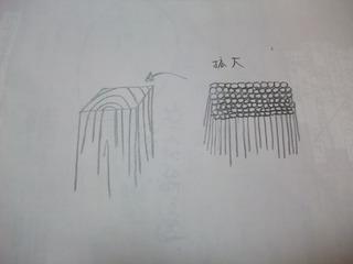 木の細胞手書き図