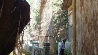 守られる木 7