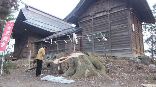 長沼神社のケヤキ伐根