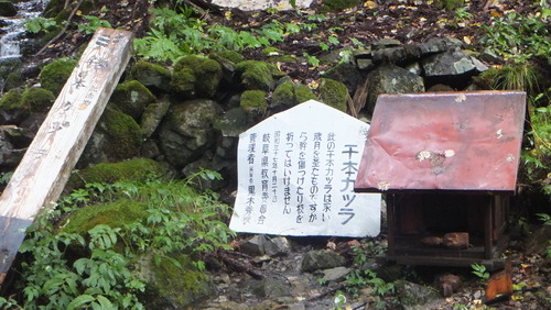 大古井の千本桂8