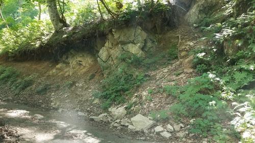 洞のカツラ 3