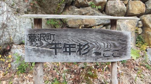 堂庭のスギ(千年杉) 1