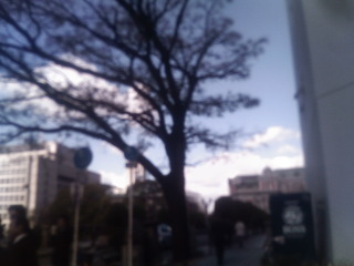 栴檀木橋の栴檀 2